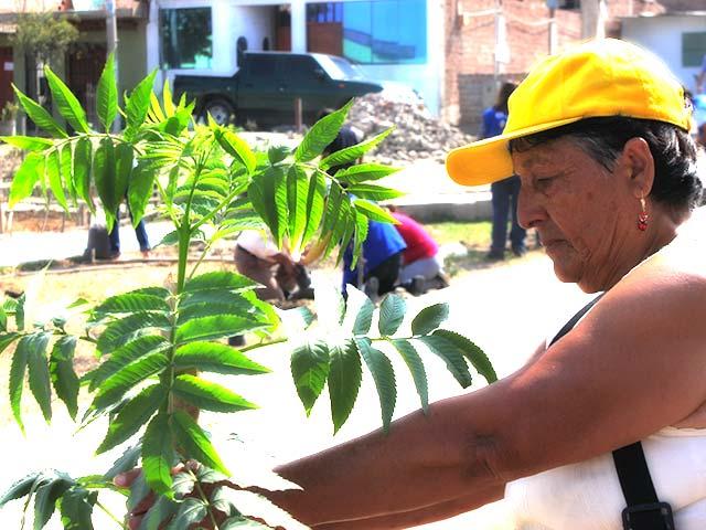 Fortalecimiento de capacidades de grupos vulnerables para la gestión del riesgo de desastres en el contexto de cambio climático en los nuevos barrios de Lima Sur